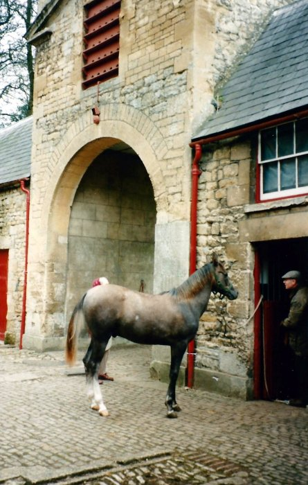 Stable block 1995